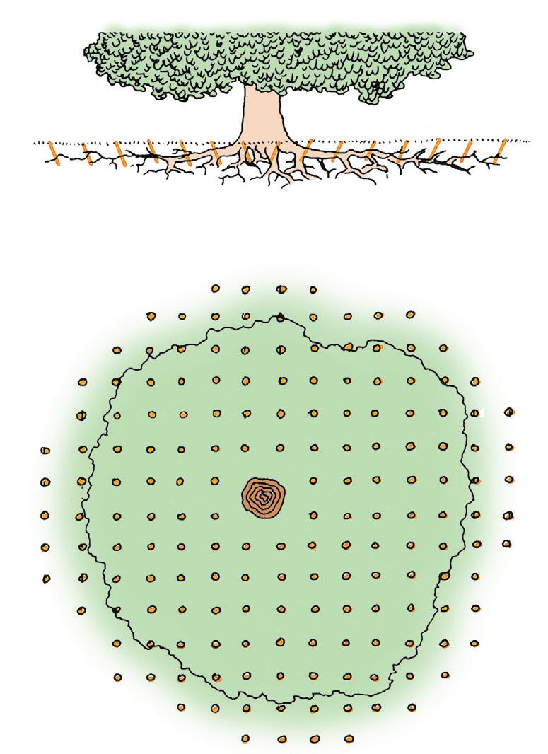 El casta o castanea for Cuanto mide un arbol